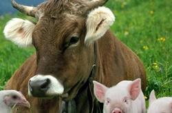 Изменены правила сопровождения домашних животных ветеринарно-санитарным паспортом