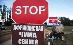 В Новой Одессе обнаружили африканскую чуму свиней
