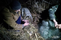 В Новоодесском районе поймали двух браконьеров с большим уловом рыбы