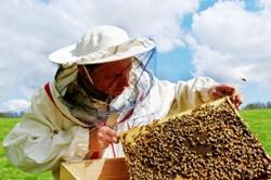 К сведению пчеловодов Новоодесского района!