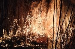 В Новой Одессе и в других районах области в результате человеческой халатности выгорело более 3 га сухостоя