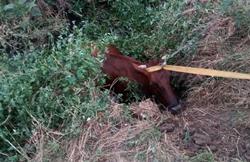 В Новой Одессе спасатели достали из колодца упавшую корову (Фото)